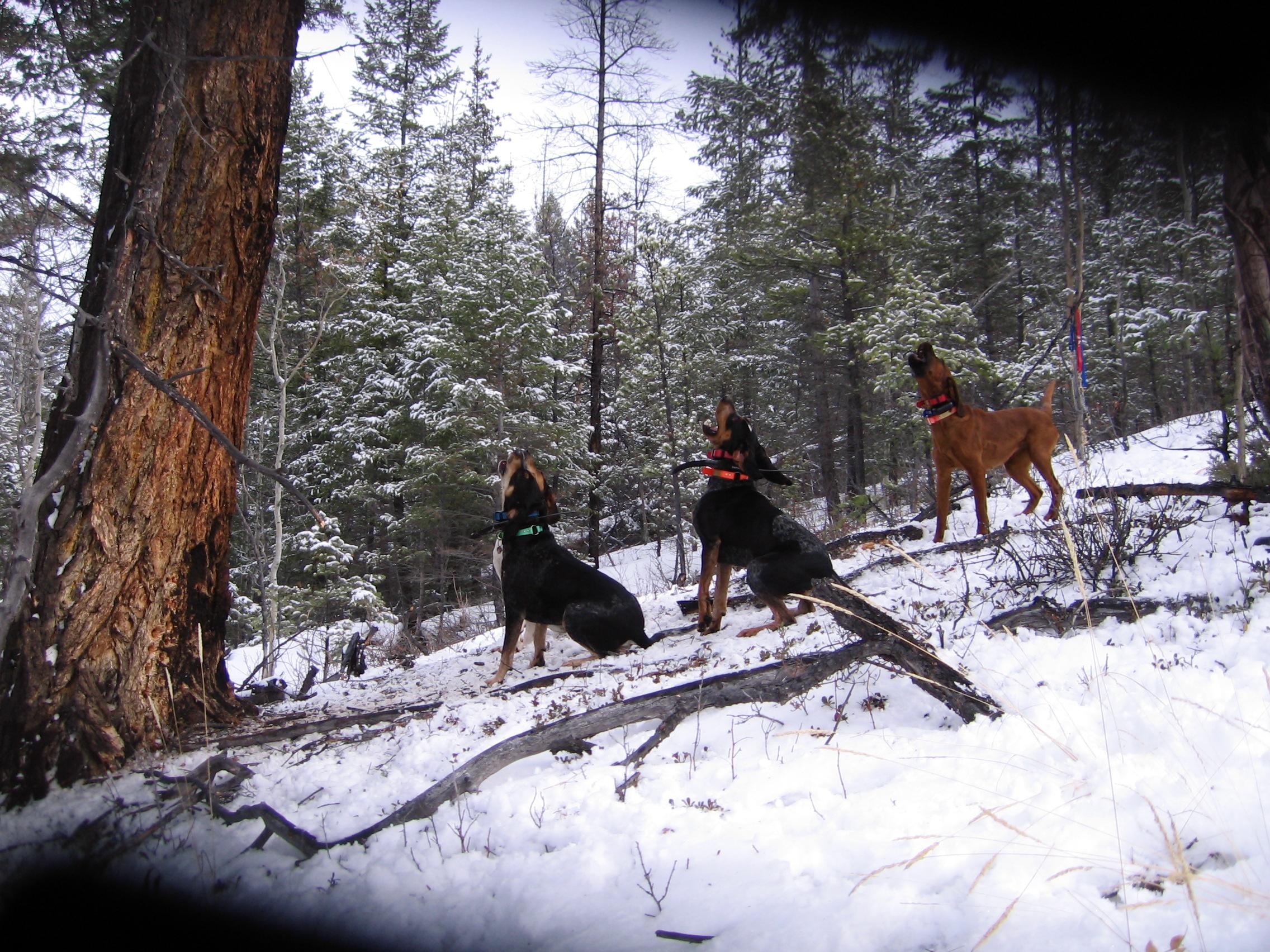 Tree hounds barking up a tree